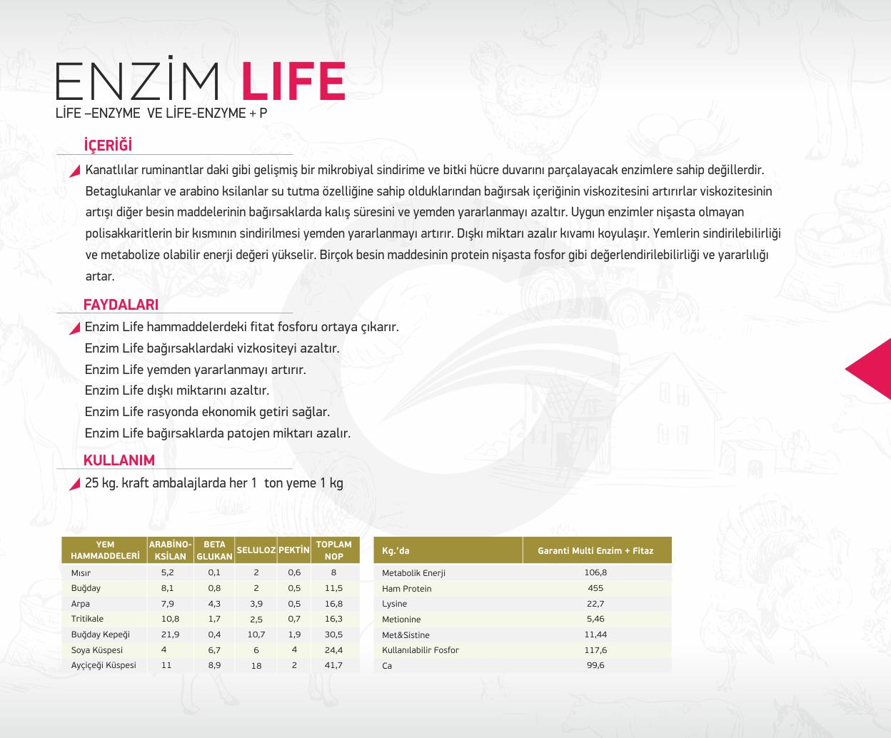 enzim life